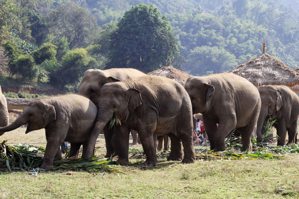 Elephants Feeding