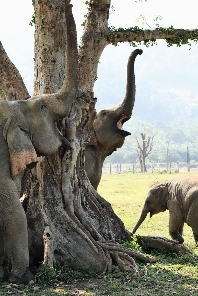 Elephants at the Tree