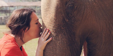 Kissing an Elephant