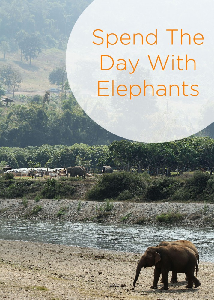 Spend The Day With Elephants In Chiang Mai